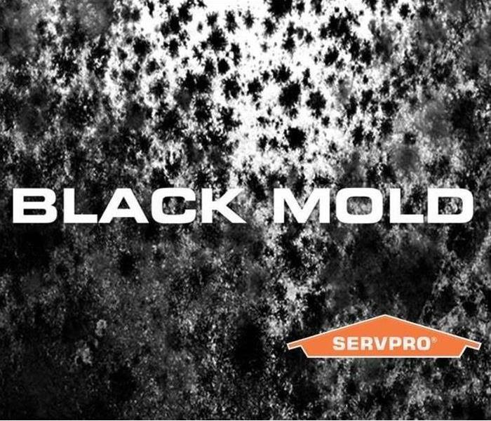 Mold Remediation Baltimore County Residents: Follow These Mold Safety Tips If You Suspect Mold